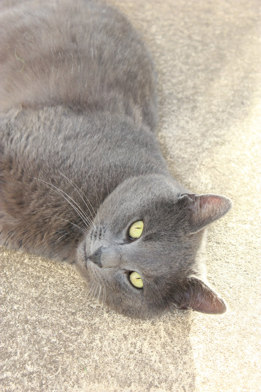 Ernest the Stray Cat (Click on photo for his story)