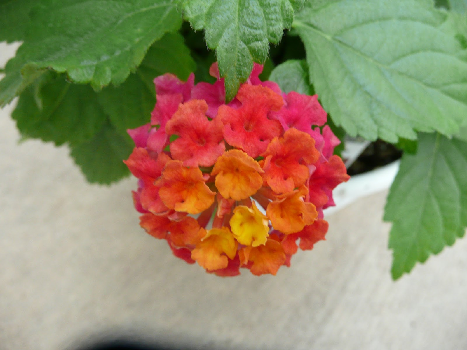Lets Grow New Annuals