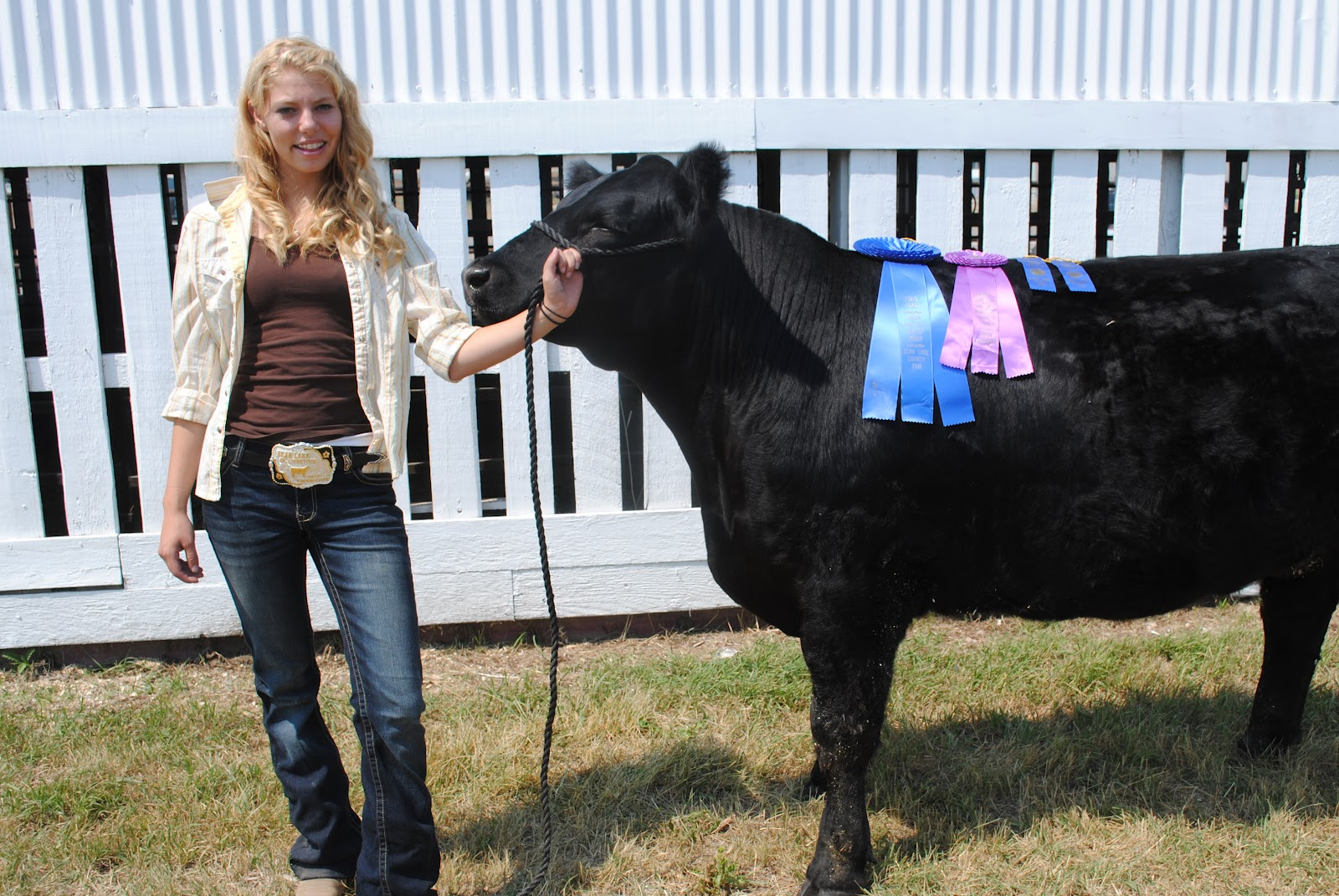 2012 Third Place Market Steer