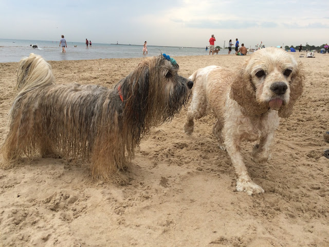 Montrose dog beach Chicago