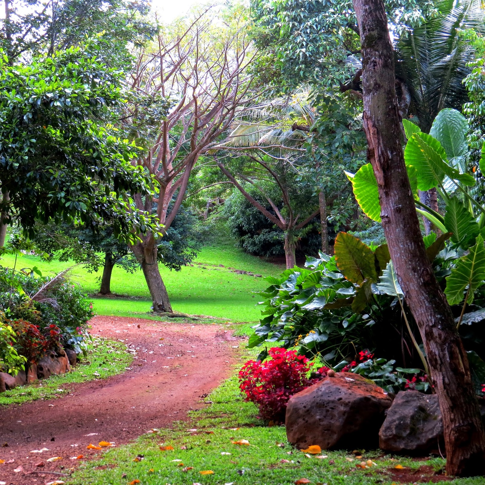 Touring The Princeville Botanical Gardens Was A Fabulous Experience For  Which We Wrote A Positive Review On TripAdvisor. Click Here To Read Our  Review.