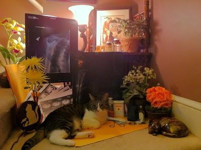 Dr. Isosceles Cat is in. - Stein Your Florist Co.