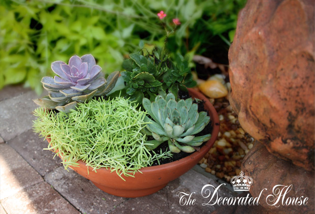 how to create a succulent dish garden tutorial