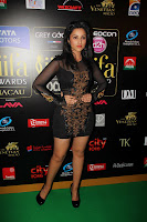Bollywood babes at IIFA Awards 2013 - Parineeti Chopra, Minissha Lamba,Shahrukh Khan,Madhuri Dixit etc