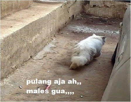 Meme Kucing Galau V Bersosial Com