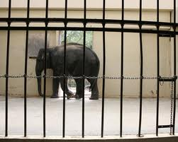 are zoos cruel to animals essay