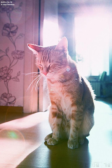 Irina Vondehn : photography : Cat Album