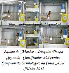 Arlequim Português Equipa Machos Poupa