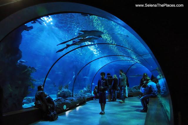 Oceanium Tunnel Biljdorp Zoo Rotterdam