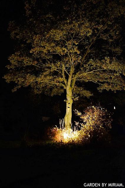 Att belysa ett träd i trädgårdens utkant är effektfullt – tänk på att använda gultonad belysning för att inte få ett spöklikt intryck