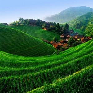 Longsheng Rice Terrace