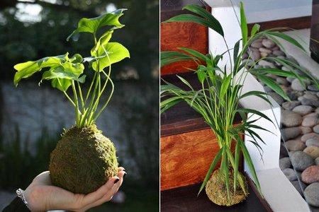 Decoraci n de interiores plantas y macetas para el - Macetas de interior ...