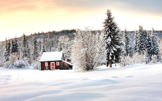 Hermosa Casita entre los Arboles de Abeto Paisajes Naturales de Inverno