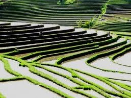Subak a world heritage site by UNESCO