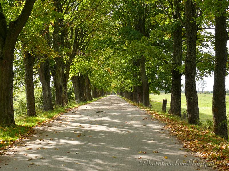 Дорога на Маяковское