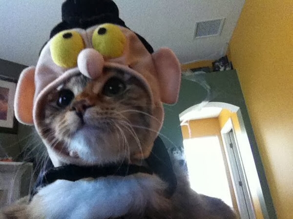 Funny cats - part 82 (40 pics + 10 gifs), cat photo, cat wears funny costume