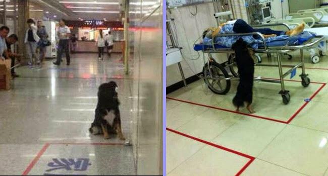 Mengharukan, Anjing ini Setia Menunggu Pemiliknya di Pintu RS