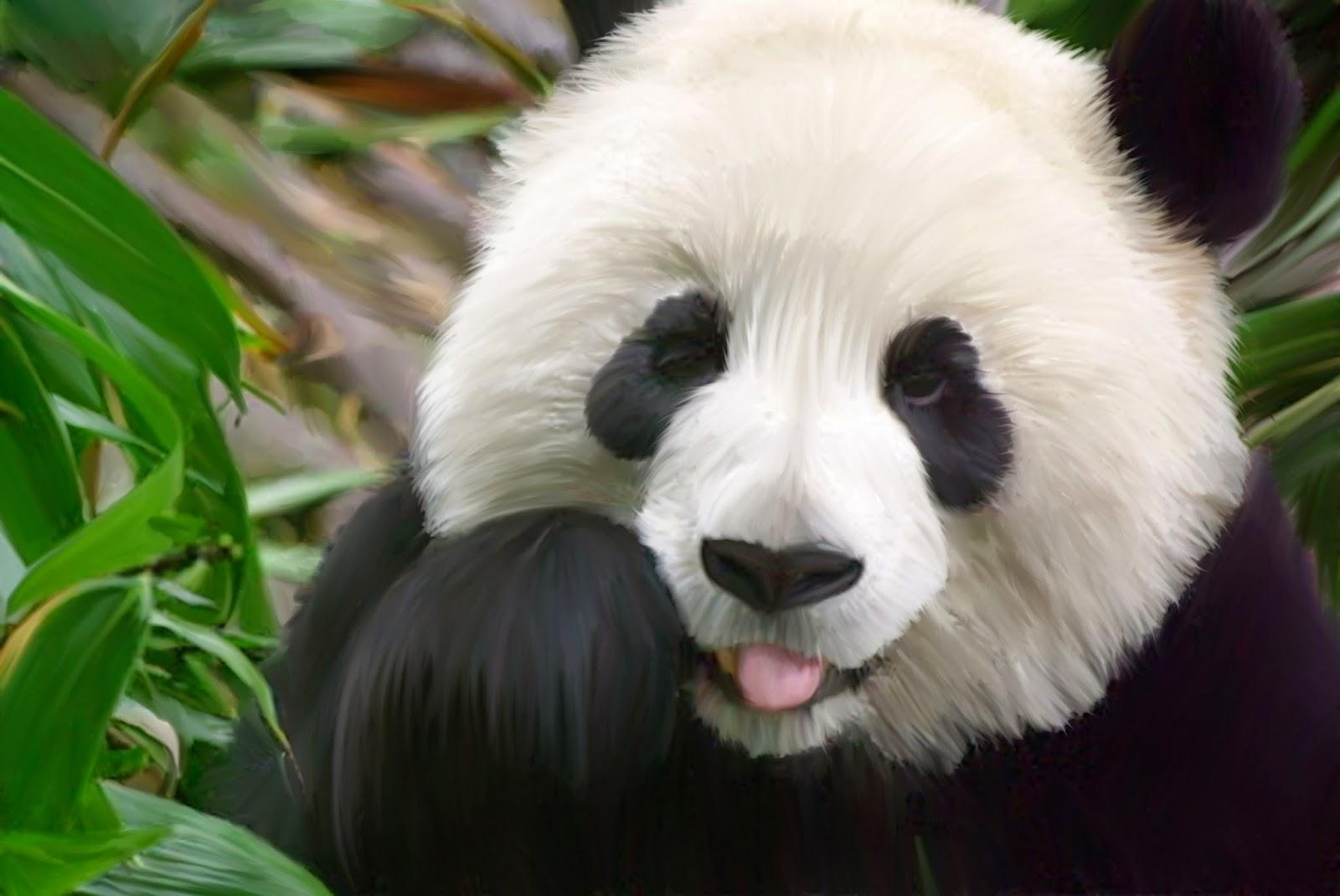 Alamanda S Room Panda Merah Si Wajah Lucu