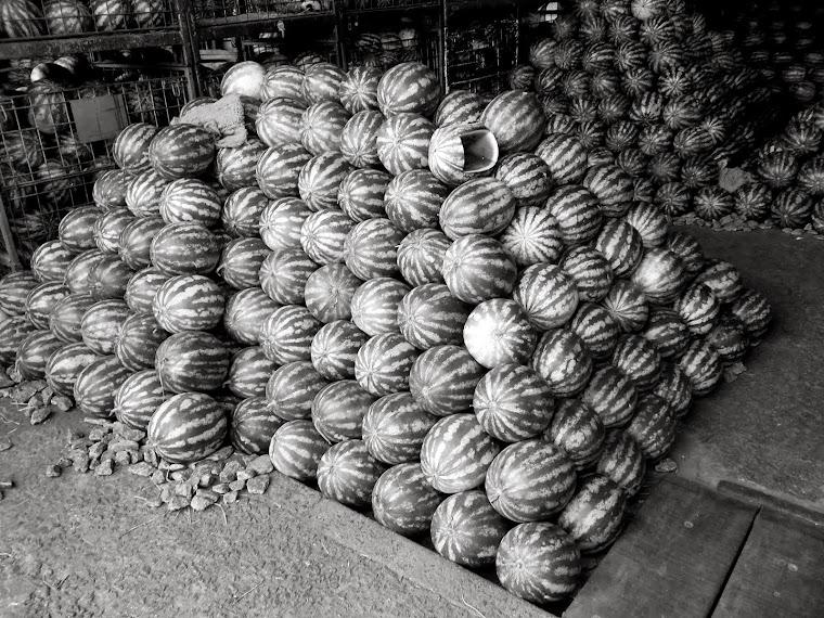 CA  _melancia fruta de preto#2_ sao paulo - SP - BRASIL