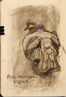 Parc Monceau pigeon sketch, by Shannon Reynolds