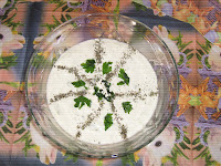 Tarator salata, letnja salata sa krastavcem