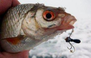 Снасть рыболовная балда