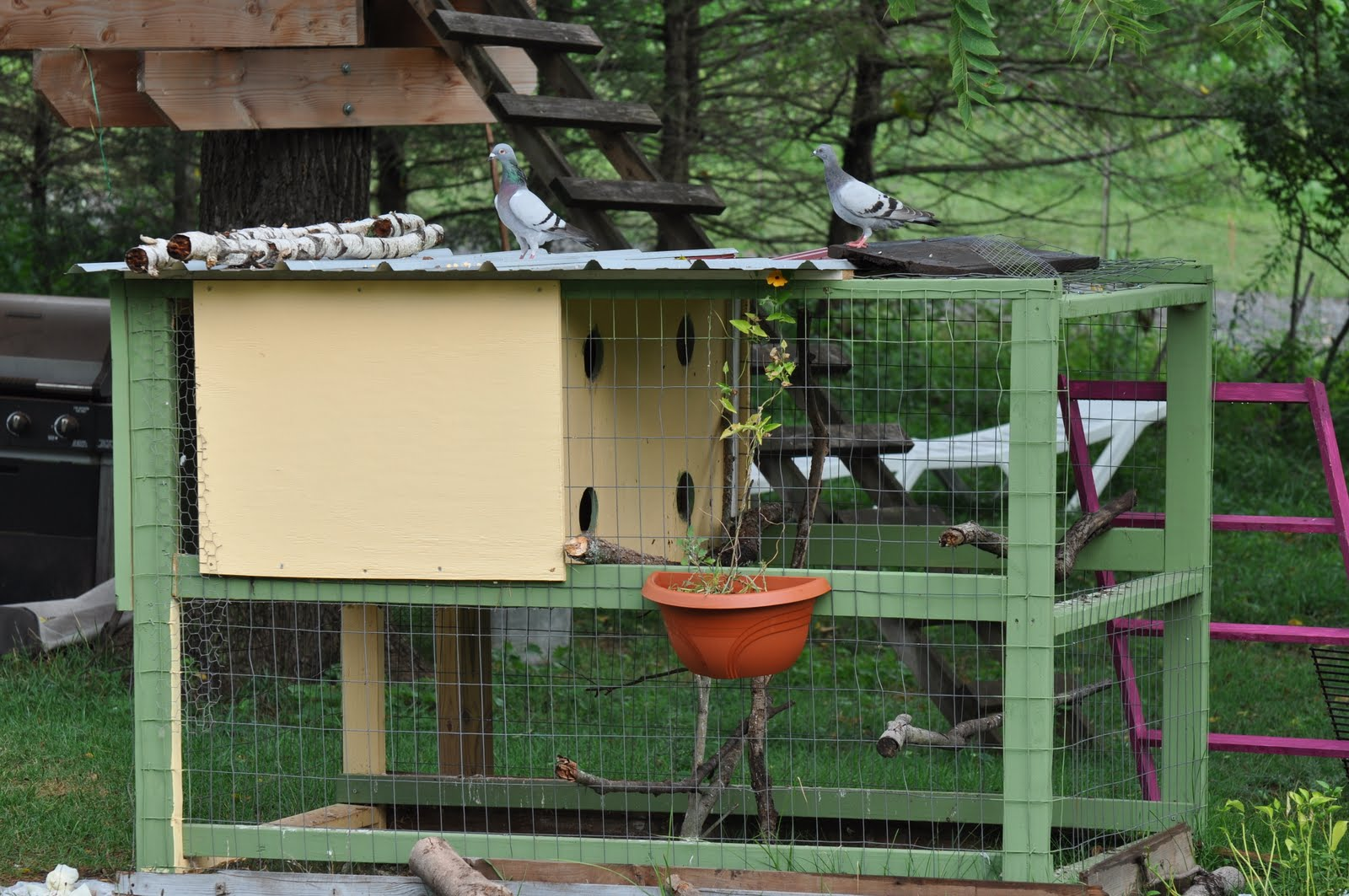 Pigeon house plans and photos - How To Make A Cat Proof Trap For Pigeon Loft It S So Easy