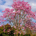 magnolie AD 2015
