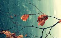 Autumn Xp Theme1