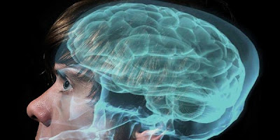 Ilmuwan Temukan Zat Kimia Pada Otak Penyebab Gay