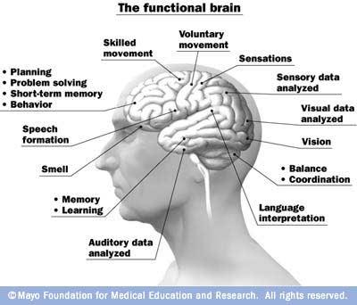 Brain Functions3