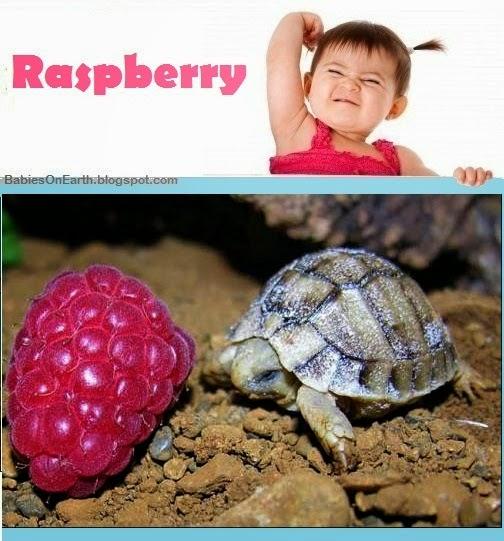 Baby Raspberry