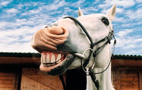 A caballo regalado no se