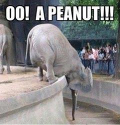 Oo Peanut