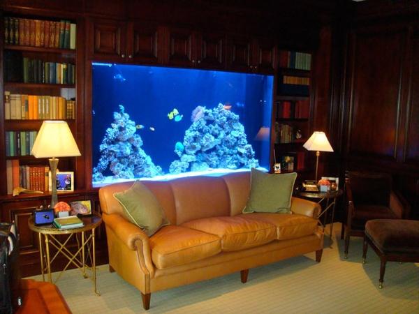 modern fish tank design dalliance design a love affair with design fish tank design