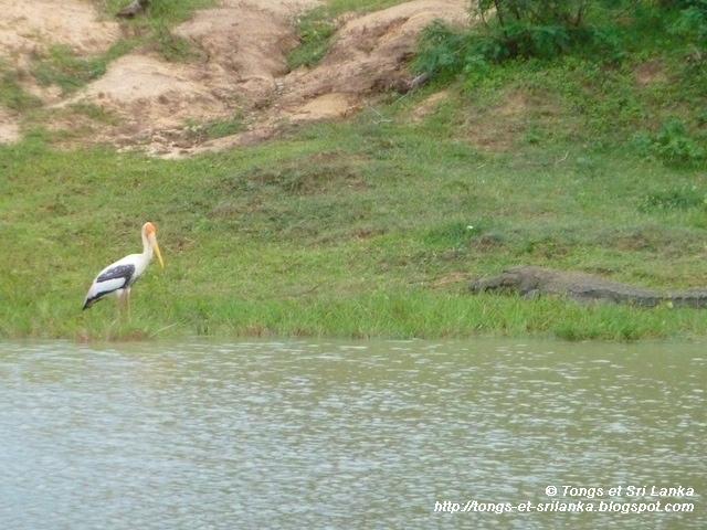 Crocodile et reptiles à Yala au Sri Lanka