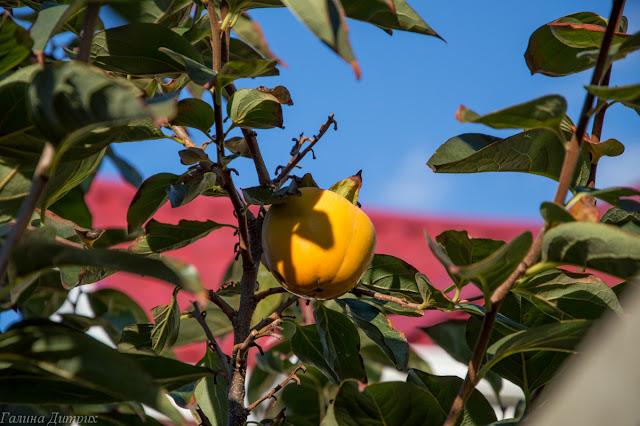 Путешествия: Адлер: ноябрьские выходные (Черное море, Сочи-парк, Формула-1 и Олимпийский парк)