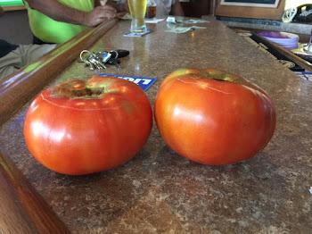 Ralphie's Mammoth Tomatoes