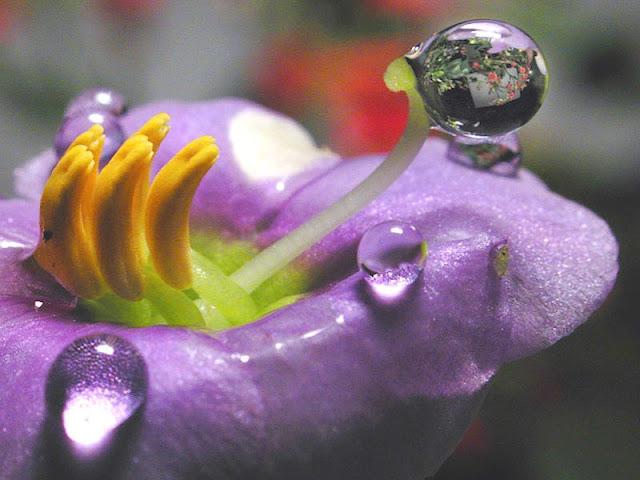 http://1.bp.blogspot.com/-OEb5onEePDM/UicfUe58r_I/AAAAAAAALlM/vc95IXTilbo/s1600/flor_violeta.jpg