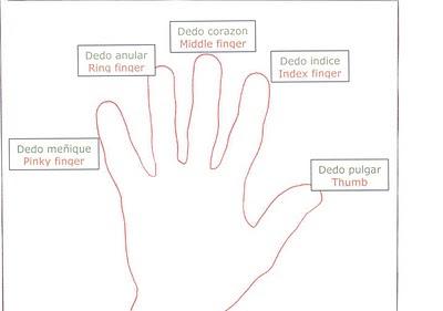 en Ingles de Dedos&form