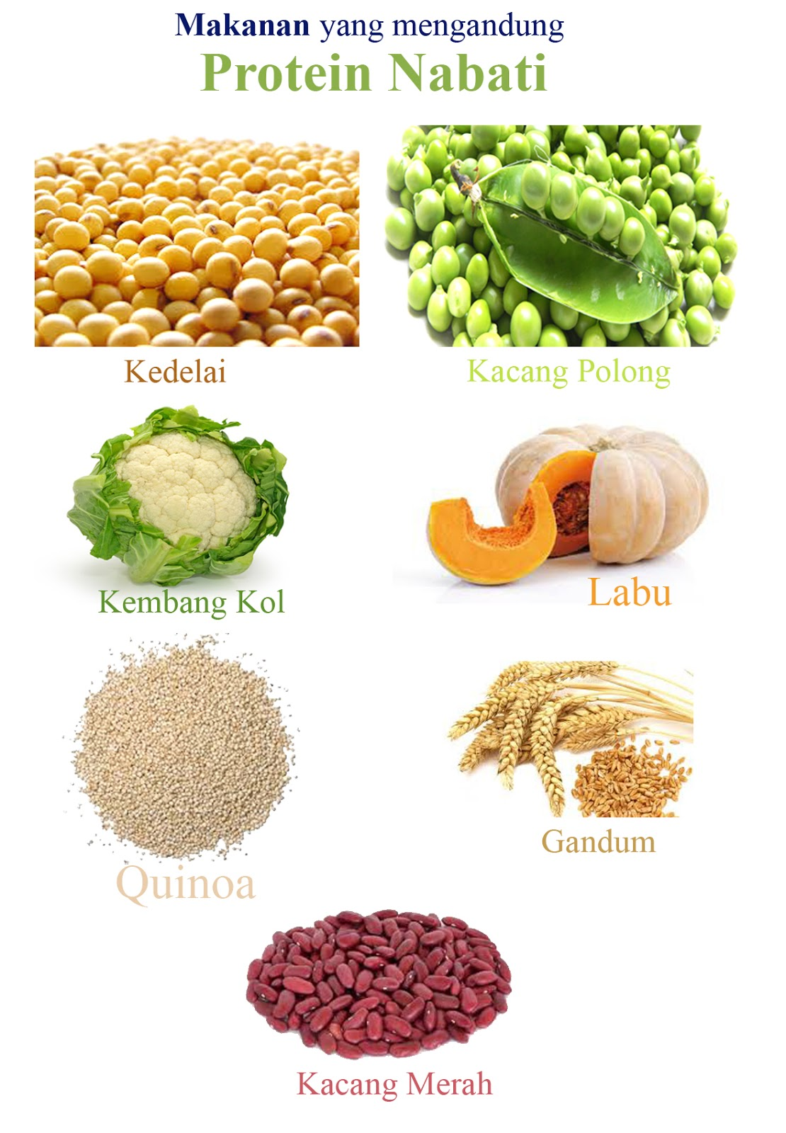 Makanan Yang Mengandung Protein Nabati Tugas Sekolah Ku