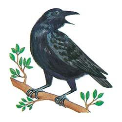 Cerita Motivasi Burung Gagak