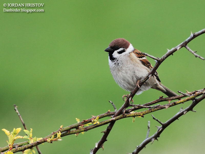 bird photography in Bulgaria