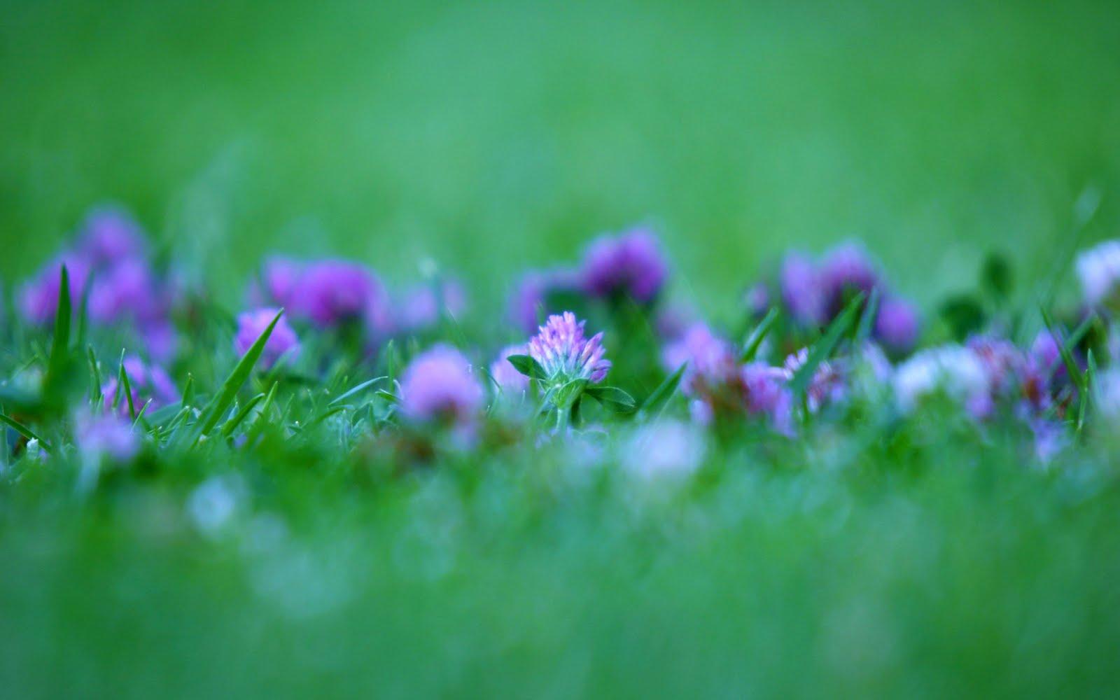 http://1.bp.blogspot.com/-OF8WziFGSSo/ThF8ZGb42qI/AAAAAAAAAfg/k3PswWWd2Jg/s1600/Madrid_Flowers.jpg