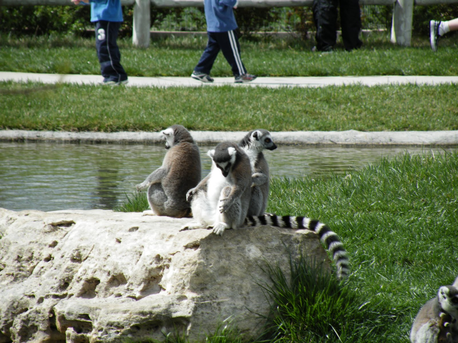 Memories Forgotten: Tanganyika Wildlife Park
