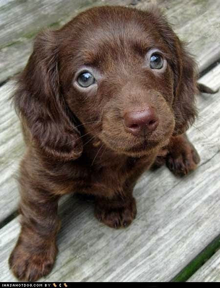 Cute puppy of the day. Via I Has a Hotdog