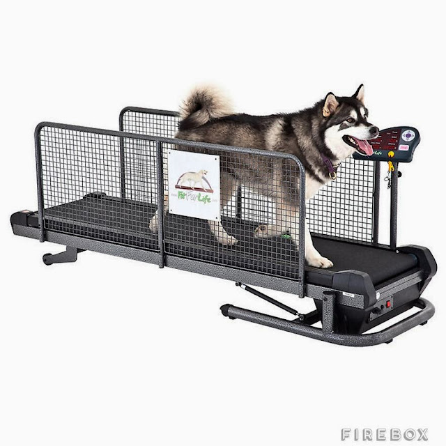 Awesome Dog Products and Gadgets (15) 6