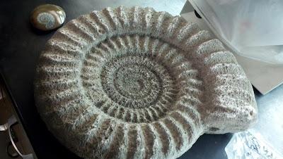 Class Ammonite