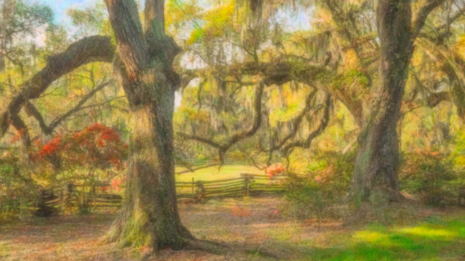 Journeys With Light: Magnolia Plantation and Gardens, Charleston ...