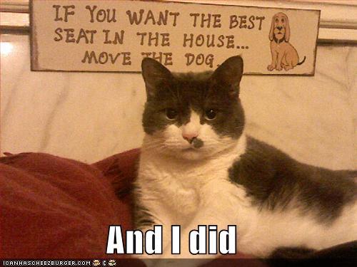 Cat Annoying Dog